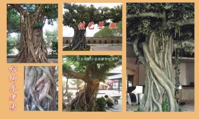 佳木斯水泥仿真榕树其他大树