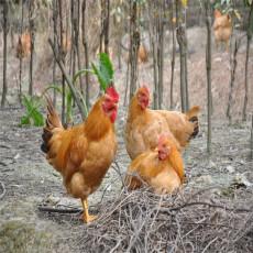 供应禽畜饲料添加剂 提高免疫力促生长 饲料添加剂权威供应商