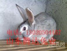青紫蓝兔外貌特征