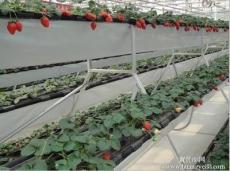 河北草莓立體種植槽價格