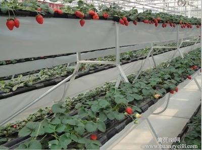 河北草莓立体种植槽价格