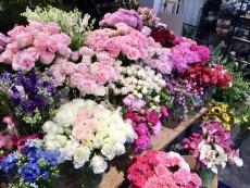 崇尚花藝 花材的保鮮與保養