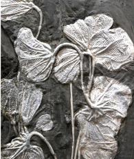 苏富比拍卖行推荐:海百合化石市场行情