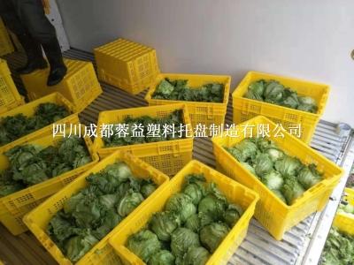 成都彭州塑料筐,彭州蔬菜水果筐